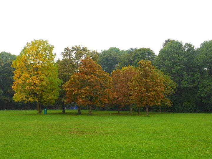 EnglischerGarten -Park