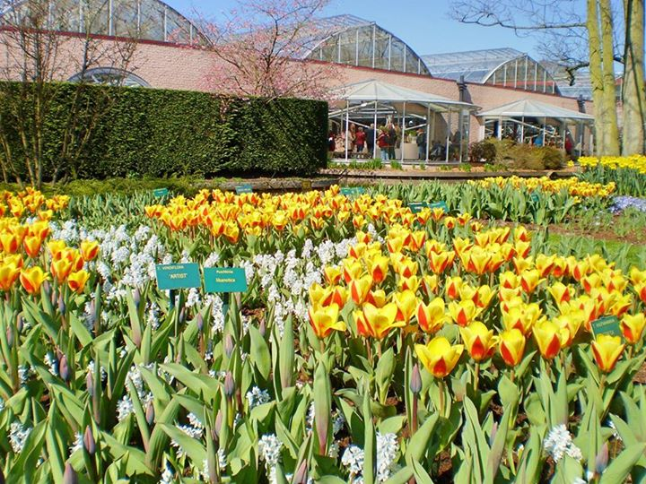 Keukenhof - inside the park