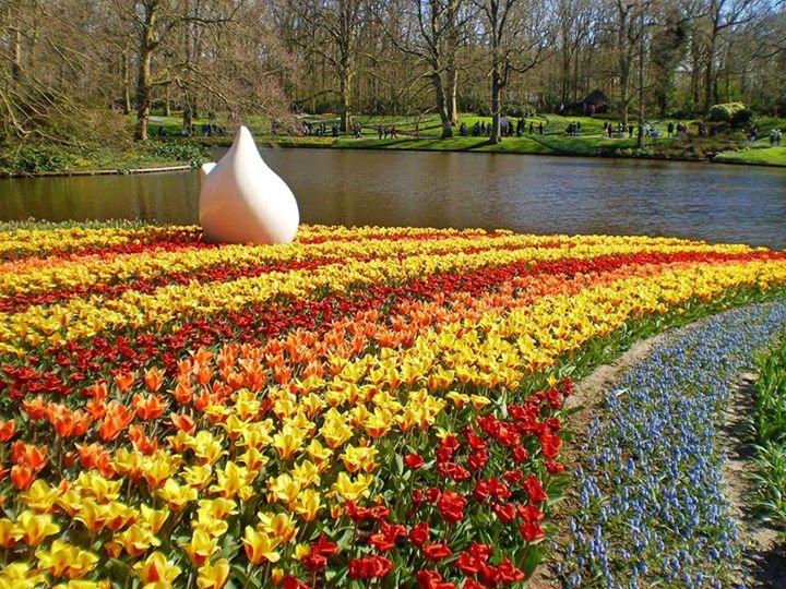 Around Amsterdam – Keukenhof Tulips Park